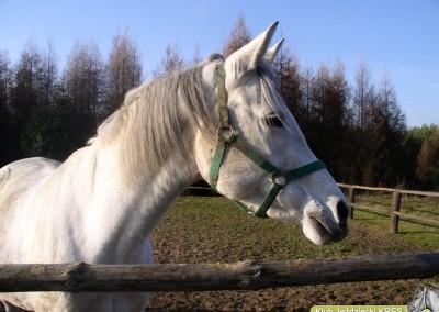 konie hipoterapia podlasie