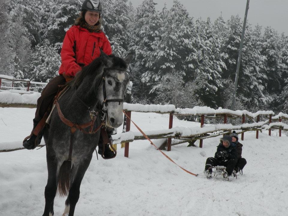 With horse on sled