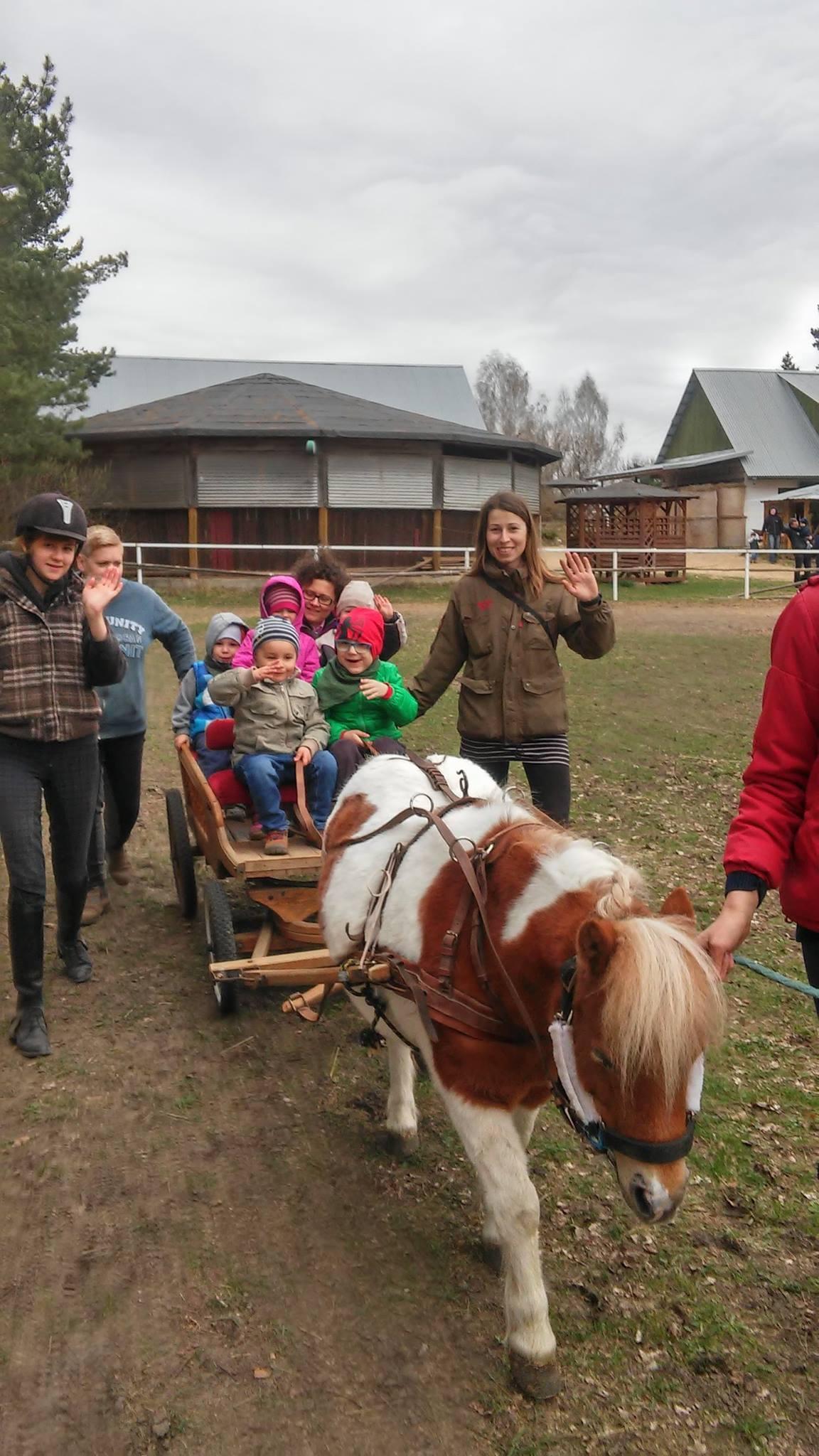 Nauka jazdy konnej - wady i zalety | Mangosteen