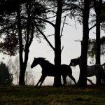 stadnina koni podlasie